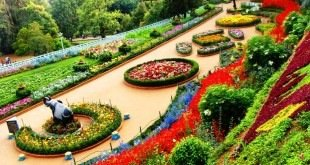 باغ رز بانکوک تایلند