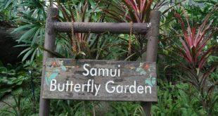 باغ پروانه ها سامویی تایلند