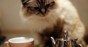 کافه حیوانات کانادا,کافه حیوانات,رستوران حیوانات کانادا,کافه کت تاون,کافه کت تاون کانادا,کافه های کانادا,رستوران های کانادا