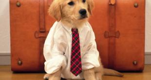 حمل حیوانات خانگی در سفر به کانادا,سفر به کانادا,بردن حیوانات خانگی به کانادا,دزباره حمل حیوانات خانگی در سفر به کانادا