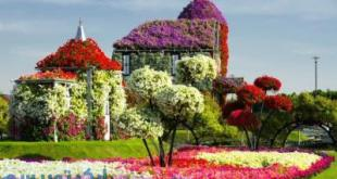 باغ گل دبی,قیمت بلیط باغ گلهای دبی,ادرس باغ گل دبی,ورودی باغ گل دبی,باغ پروانه دبی,آدرس میراکل گاردن دبی,باغ پروانه های دبی,دهكده جهاني دبي