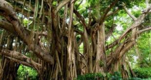 بزرگترین درخت مصنوعی جهان,درخت مصنوعی دبی,جنگل بارانی دبی,جنگل مصنوعی دبی,طبیعت مصنوعی دبی,طبیعت دبی,دبی