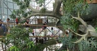 هتل با جنگل بارانی دبی,جنگل بارانی دبی,سفر به دبی,هتل های دبی,هتل با جنگل بارانی,هتل جنگل بارانی دبی,جاذبه های گردشگری دبی